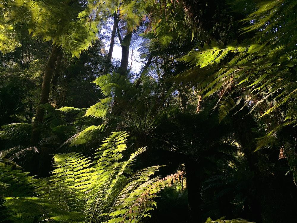 Maits Rest Rainforest Walk - Great Ocean Road Tour