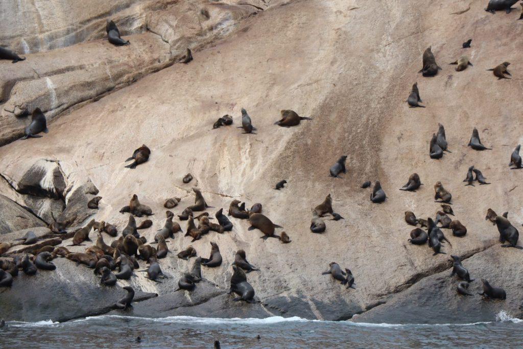 Wildlife Coast Cruise - Wilsons Promontory